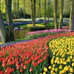 Attracties in Zuid Holland: De Keukenhof