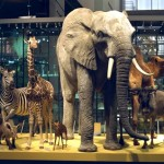 Attracties in zuid holland: Naturalis Leiden